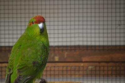 vogelschau13
