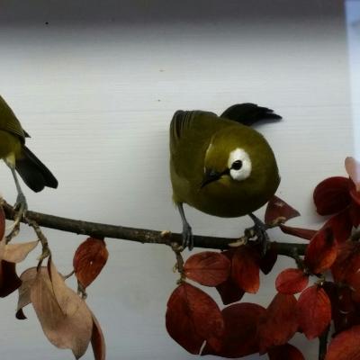 Vogelschau2015