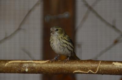 Vogelschau2015TW