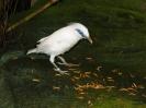 Ausflug Walsrode Mai 2005